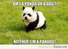 Am I A Panda Or A Dog?