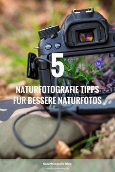 Diese 5 Naturfotografie Tipps solltest Du kennen um bessere Naturfotos zu machen. Erfahre mehr, wie ich meine Chance auf gute Bilder erhöht habe!  #naturfotografie #tipps #naturfotografietipps #fotografie #natur