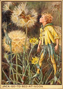 Jack go to bed at noon flower fairy Cicely Mary Barker, Chris Riddell, Illustration Plate, Flower Quotes Love, Drawing Wallpaper, Vintage Fairies, Flower Fairies, Norman Rockwell, Fairy Art