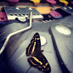 滑草的时候,蝴蝶飞到脚边。很久没有踩草了,今天算过瘾了