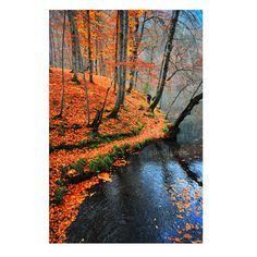 Autumn Fall leaves Nature photography Wall Decor lake by gonulk