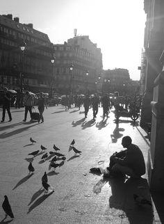 Pigeon Man - Paris Street Photography
