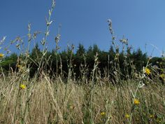 A field with wildflowers, baking in the southern sun