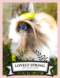 "Zolux joins Yummypets and offers you many prizes to win! For a chance to win, it's very simple, follow the steps below: Follow Zolux on Pinterest: http://ymp.io/u/Dlm - Follow Yummypets on Pinterest: http://ymp.io/u/tvb - Follow the board ""Lovely spring for your pets !"": http://ymp.io/u/sei - Repin the products that you would like to win - Results on April 13th 2015. GOOD LUCK! #game #pets #rodent #bunny #petsupply #gift #pinterest #yummypets #zolux"
