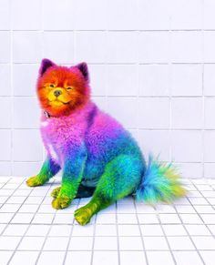 Animals: The Magnificent Rainbow Makeover Edition - World's largest collection of cat memes and other animals Cute Cartoon Animals, Cute Little Animals, Baby Animals Pictures, Animals And Pets, Easy Animal Drawings, Rainbow Dog, Image Nature, Fluffy Dogs, Colorful Animals