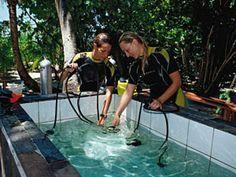 Dive Gear Maintenance Made Easy | Scuba Diving