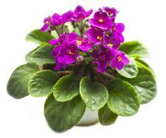 Máte problém s povadlými pokojovými květinami? Pomůžeme vám je vzkřísit zpět k životu