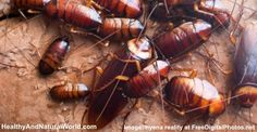 How to Get Rid of Roaches Naturally.  No problems now but good to know!