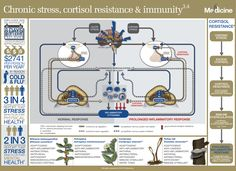The role of chronic stress, cortisol resistance and immunity in health Acute Stress, Chronic Stress, Impact Of Stress, Cortisol, Rheumatoid Arthritis, Immune System, Health And Wellness, No Response, Medicine