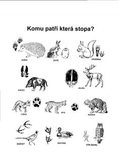 Prvouka | Detail | Pomoc učitelům Coloring Books, Coloring Pages, Animal Tracks, Elementary Science, Forest Animals, Primary School, Science And Nature, School Projects, Montessori