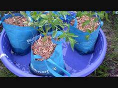 Phenomenal Sub-Irrigated Kiddie Pool Grow Bag System – Off Grid World Fall Vegetables, Growing Vegetables, Planting Vegetables, Vegetable Gardening, Growing Plants, Container Gardening, Gardening Tips, Balcony Gardening, Urban Gardening
