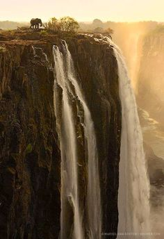 Amazing Falls!! gorgeous elephants <3