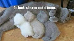 """""""Oh look, she ran out of toner."""""""