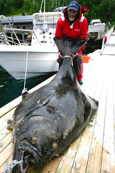 "I wanna go to Alaska just for the""halibut"" Fishing Life, Gone Fishing, Best Fishing, Kayak Fishing, Fishing Boats, Fishing Stuff, Spear Fishing, Trout Fishing, Trophy Fish"