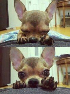 Peek-a-boo or deep in prayer? So cute