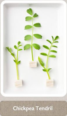 Herbs Micro Herbs, Spices And Herbs, Fresh Herbs, Types Of Herbs, Homemade Seasonings, Herbal Medicine, Home Brewing, Herb Garden, Cleanse