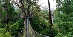 Bangkirai hill located