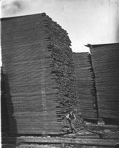 Man Standing Beside Tall Stacks Of Lumber Meadow River