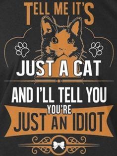 It's just a cat - Funny Cat Quotes Crazy Cat Lady, Crazy Cats, I Love Cats, Cool Cats, Cat Signs, Cat People, Cat Quotes, Beautiful Cats, Cat Life