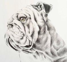Bulldog pencil drawing, pet drawing UGA / Georgia