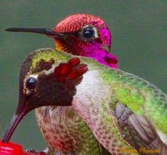These two birds are beautiful colors. rich...