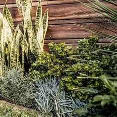 Textured planting for a full sun garden bed toughplants - front yard landscaping ideas for full sun Full Sun Garden, Full Sun Plants, Landscaping With Rocks, Front Yard Landscaping, Landscape Design, Garden Design, Deck Planters, Coastal Entryway, Coastal Farmhouse