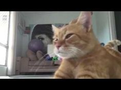 15 Videos That Prove Cats Are Evil and Can't Be Trusted