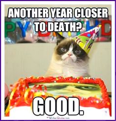 Birthday Meme with a Cat: One year closer to death! Good!