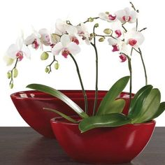 Cura delle orchidee