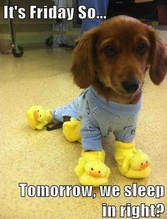 """It's Friday, so...Tomorrow we sleep in right?"""