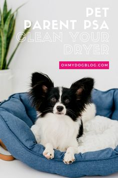 According to the Consumer Product Safety Commission, there are about dryer fires each year. Pet parents: Here's how to clean the fur out of yours! Dryer Hose, Product Safety, Public Service Announcement, Pet Safe, Consumer Products, Are You The One, Best Dogs, Your Pet, Organizing