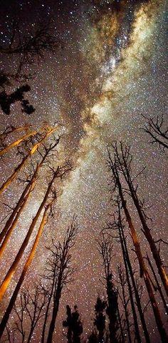 #vialactea #vista #estrelas #floresta #acampar