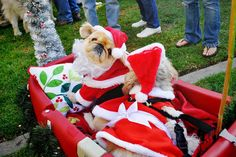 A dog dressed as Santa Claus.