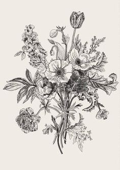 Vintage Illustrations Victorian bouquet Spring Flowers Poppy anemones tulips delphinium Vintage botanical illustration des Stock Vector - - Millions of Creative Stock Photos, Vectors, Videos and Music Files For Your Inspiration and Projects. Art Floral, Floral Drawing, Gravure Illustration, Illustration Blume, Engraving Illustration, Flower Bouquet Drawing, Flower Art, Drawing Flowers, Flower Drawings