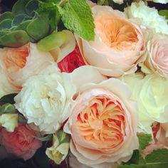 Garden roses - pico soriano designs