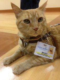 hospice volunteer: animals are my favorite volunteers. They make patients happier than anything else