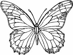 Adult Coloring Pages Animals Of Butterflies For Adults Awesome