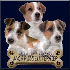 I Love Jack Russell Terriers!:)