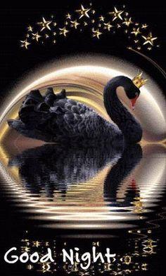 DIY Diamond Painting Black Swan Against the Moon - craft kit – TurquoiseRoads Beautiful Gif, Beautiful Birds, Poster One Piece, Gif Bonito, Beau Gif, Animiertes Gif, Moon Crafts, Foto Gif, Good Night Gif