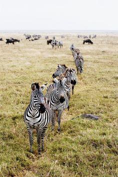 Ngorongoro Crater, Tanzania.