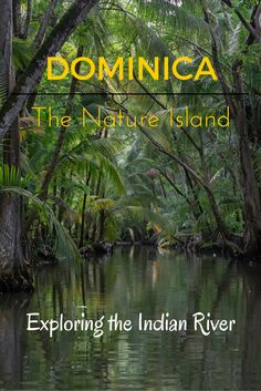 The atmosphere of Dominica's Indian River makes it one of the best river tours in the entire Caribbean.