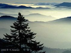 Clingmans Dome in the Great Smoky Mountains National Park.  tsmcv.org