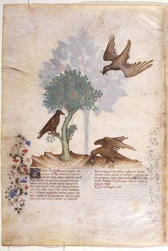 On Plants - Grassi, Giovannino de', approximately 1340-1398 Grassi, Salomone de', active 1399-1400