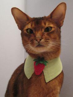 Felt Strawberry tie with point collar. $29.00, via Etsy.
