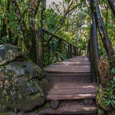 God's Window  #mpumalanga #godswindow #threerondavels #southafrica #southafrican #southafricaza #blyderiver  #canyon #africa #nature_shooters #nature #natural #natureza #nature_lovers #natures_hub #landscape #landscapes #naturelover #naturephotography #nature_perfection #natureaddict  #picoftheday #graskop #MeetSouthAfrica #landscapelovers #landscapes #landscape_captures by mlle_zaza
