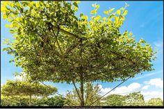 Oranienburg (Mai 2014) - Schlosspark Oranienburg #SchlossparkOranienburg #Oranienburg #Brandenburg #Deutschland #Germany #biancabuergerphotography #igersgermany #IG_Deutschland #ig_germany #shootcamp #shootcamp_ig #pickmotion #diewocheaufinstagram #visitbrandenburg #visit_brandenburg #AOV5k #park #Schlosspark #garden #canon #canondeutschland #EOS70D #Baum #tree