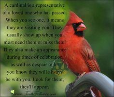 What A Cardinal Bird Means Carbk