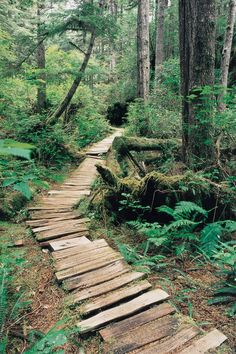 The Wildside Trail on Flores Island. A Trail used by the Ahousaht people for thousands of years.