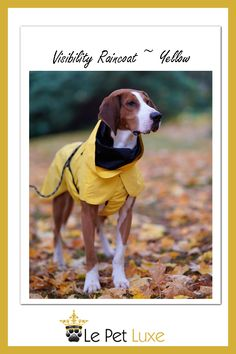 Visibility Raincoat serves both as a raincoat and as a safety gear. It has a stylish dark look at daylight, yet it shines as bright as best reflective in low light conditions. Dog Lover Gifts, Dog Gifts, Dark Look, Dog Shop, Dog Carrier, Waterproof Fabric, Low Lights, Spring Collection, Ladies Day
