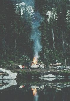 Imagen de nature, fire, and forest